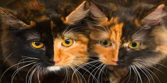 la leyenda de las gatas carey imperdible