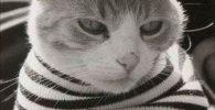 nombre frances para tu gato