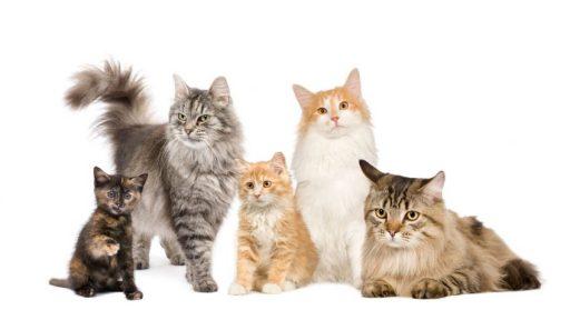 varios gatos cuanto viven