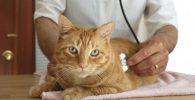 enfermedad de los gatos todo